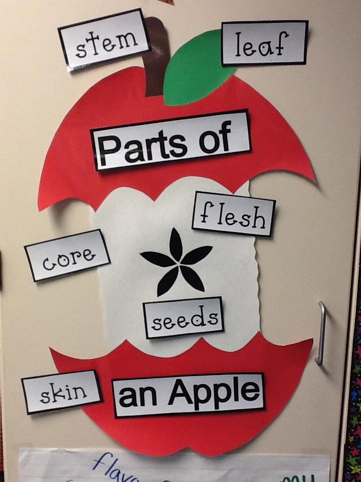 Adventures In Mrs  Martin U0026 39 S Room  Apples  Apples  Apples