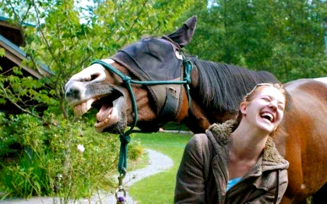 funny laughing horse, funny animal pictures of the week