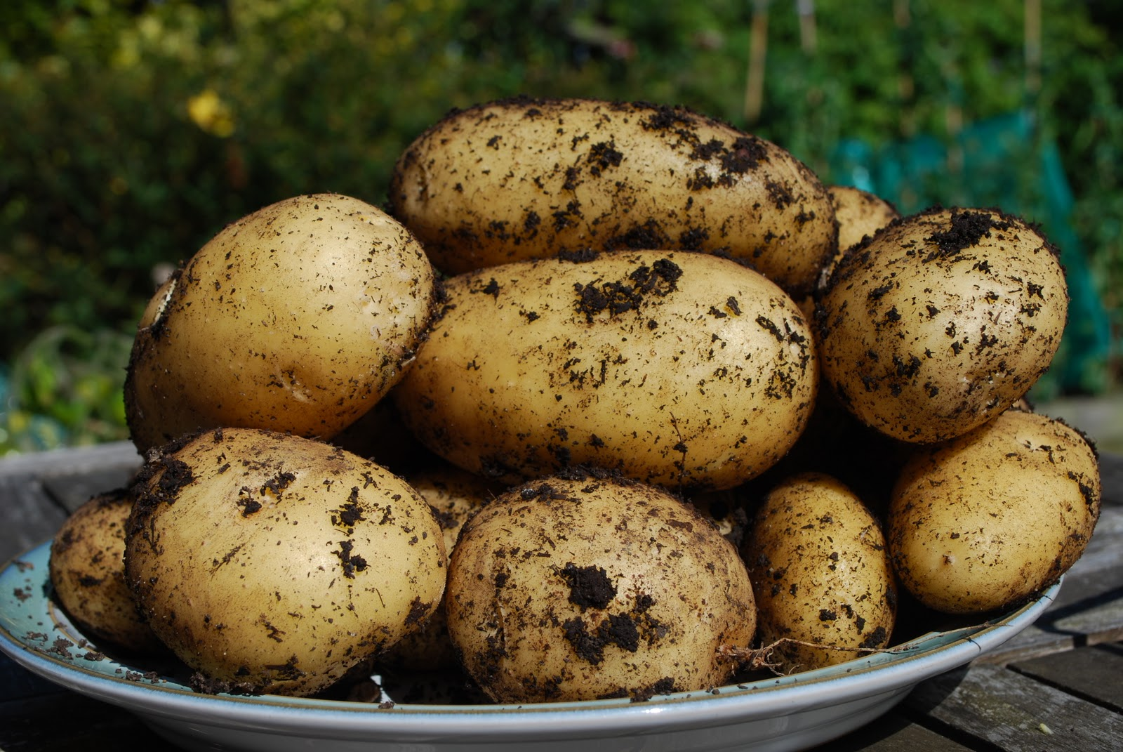 Town and Country Blog: Christmas dinner - veg grower style!