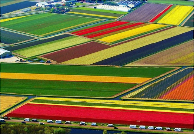 Tulip National Farm in Netherlands