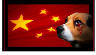 Image Petition to Stop Dog Meat Eating Festival in China banner - Chinese flag and dog with blood oozing from its eye