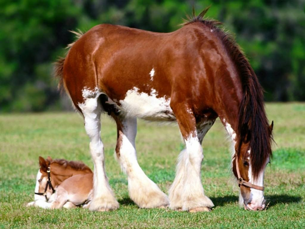 10 most beautiful horses in the world explore amazing world for Beautiful horses
