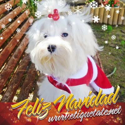 Descarga Gratis – Imágenes Navideñas de Perritos para Facebook