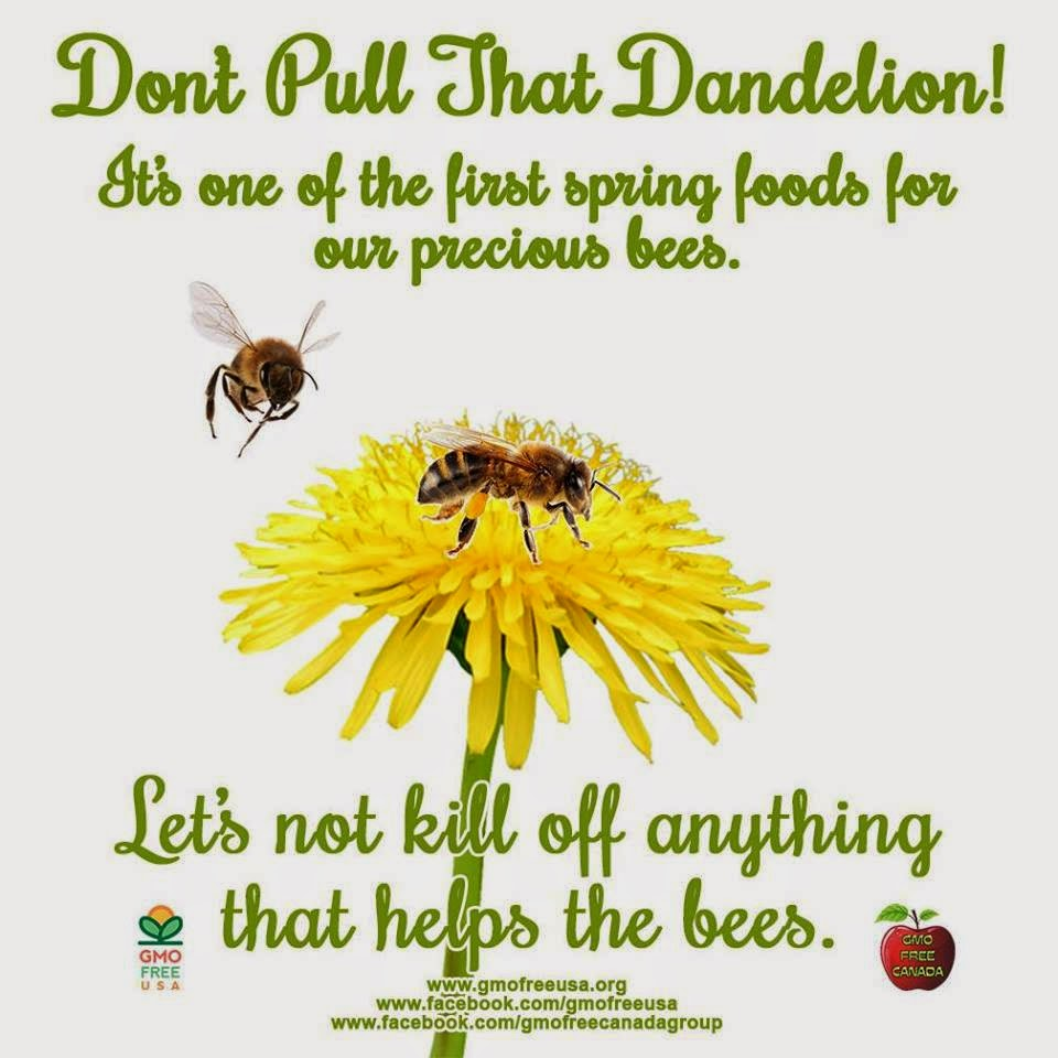 Save our bees!!