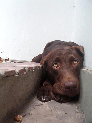 Resultado de imagen de pirotecnia perros