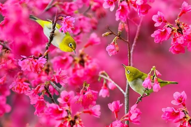 Nature,Bird picture