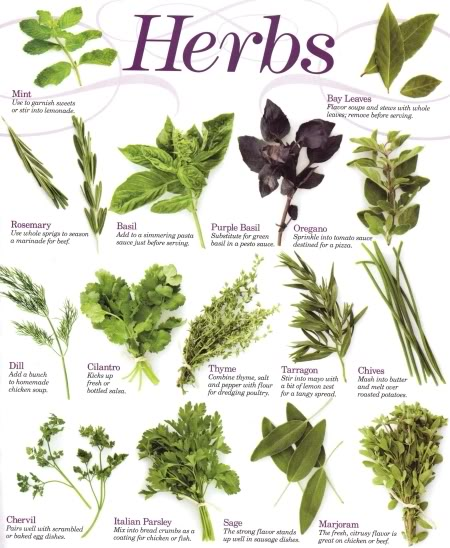 herbs Best Natural Bladder Control