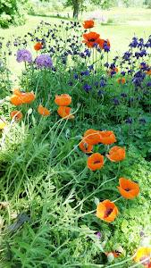 Jane Garden
