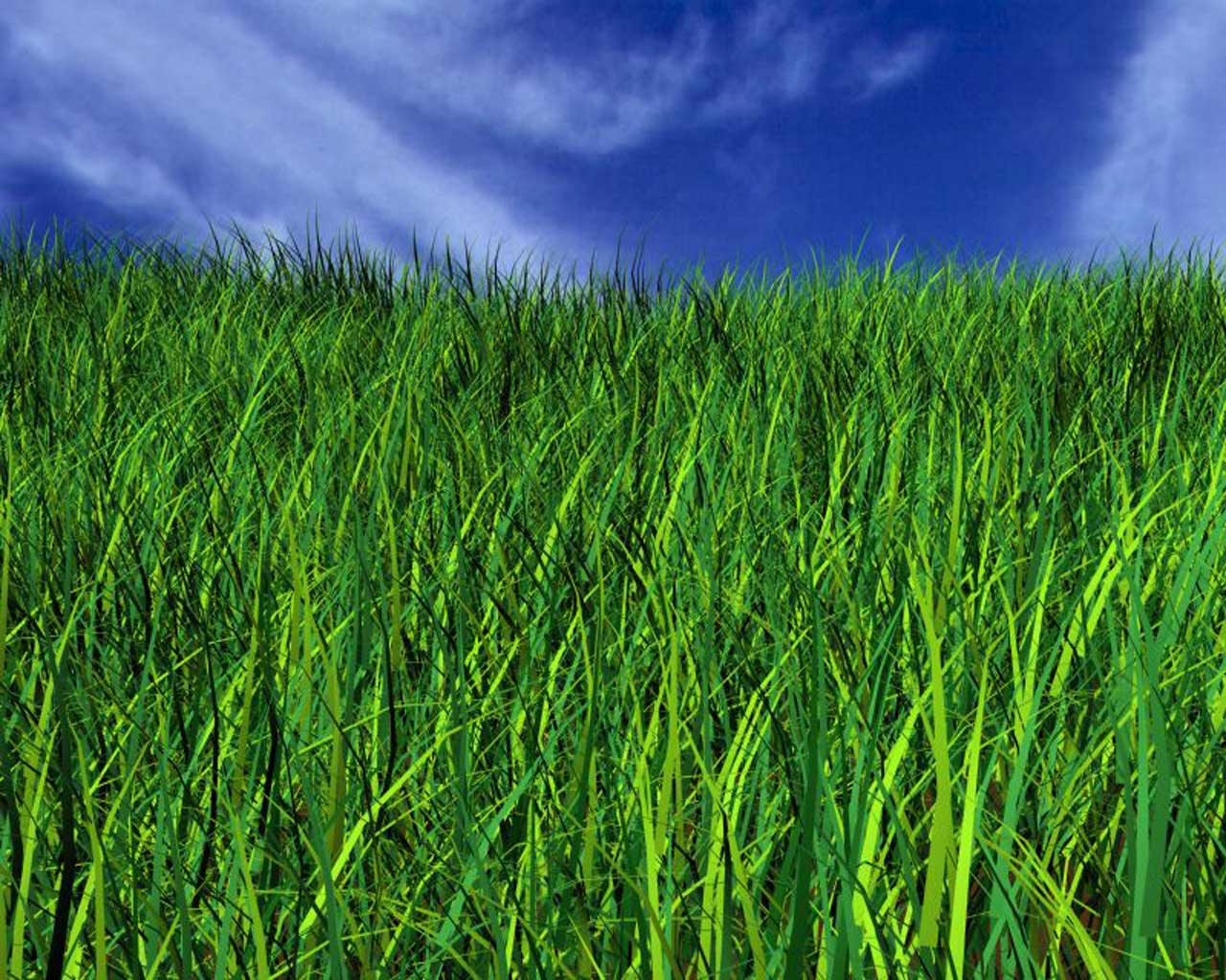 Down on the farm where the green grass grows for Long grass plants