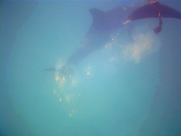 dolphin feces