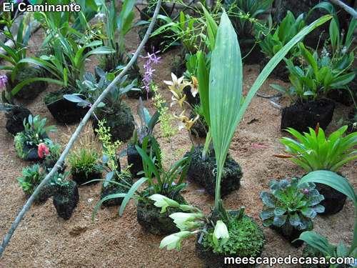 Jardines con orquideas y bromelias for Plantas ornamentales helechos