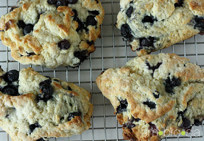 ambrosia: Blueberry and White Chocolate Scones