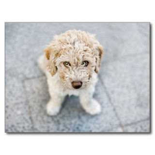 Yes I Did It.. and I Love You   Cutest Dog Photo Poster