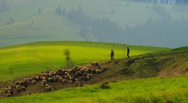 بالصور: مناظر ريفية طبيعة تظهر اللوحات في تلال الزمرد 2013 عبر موقع أهلا بالعالم