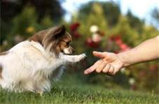 A Well-Trained Dog Is A Happy, Safe And Healthy Dog!