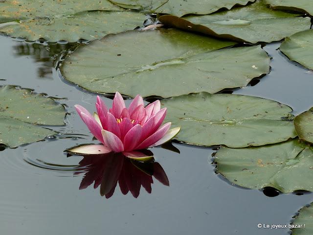 Giverny - maison et jardin de Claude Monet - le jardin d'eau - les nympheas