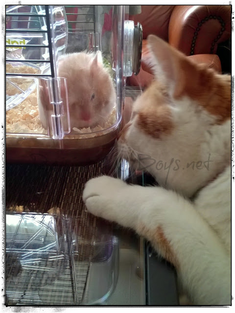 cat & hamster
