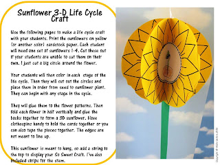 life cycle of a sunflower craft