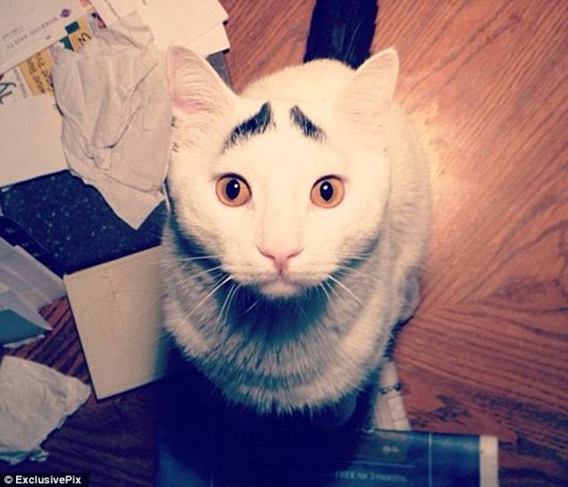 Meet Sam the cat whose funny black hair has made him an internet hit