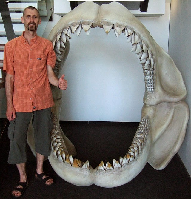 http://sciencythoughts.blogspot.co.uk/2014/11/the-demise-of-megashark.html