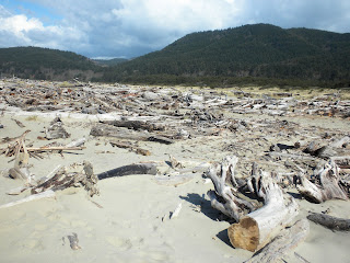 photo of driftwood at Nedonna Beach Oregon by Nancy Zavada