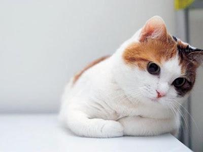 Cute Cat iPad mini Wallpaper
