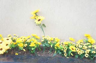 Flores para decorar a Festa Junina