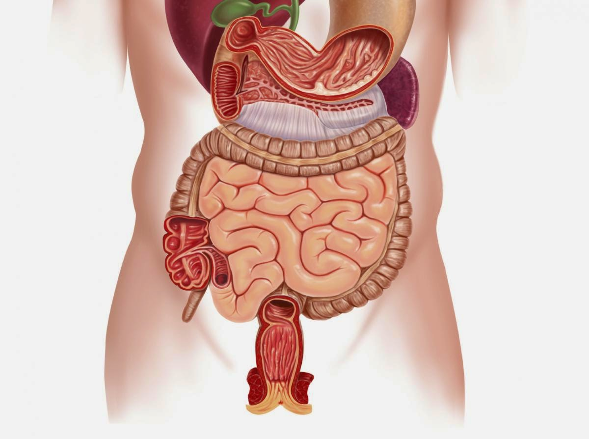 Why Bowel Cancer Sometimes Outsmarts Treatment