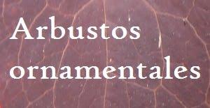 ARBUSTOS ORNAMENTALES