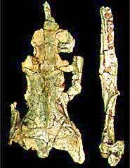 cretaceous snake