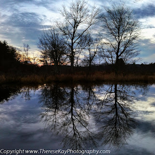 photograph of two trees reflected in the water in winter