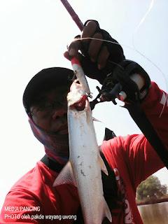 Mengetahui migrasi ikan dan pemilihan waktu terbaik untuk mancing