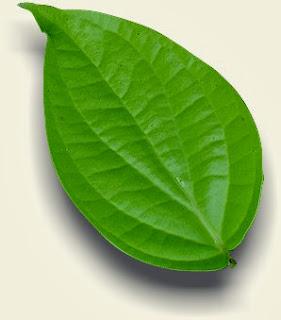 khasiat daun sirih untuk kesehatan
