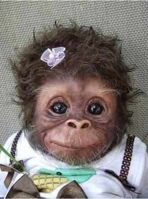 Pretty Baby Monkey