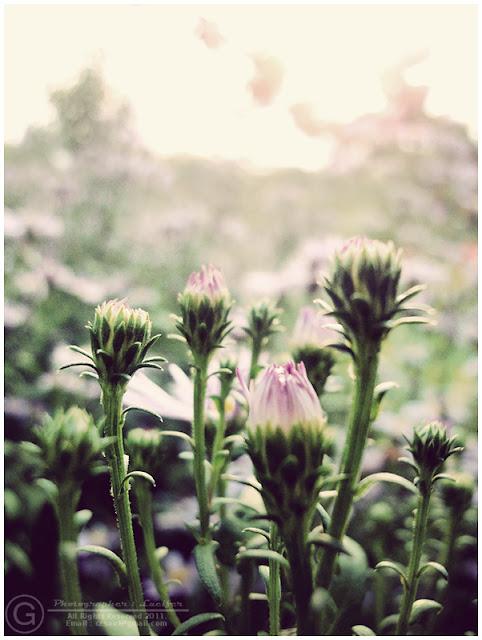 Photograph Flower Bloom