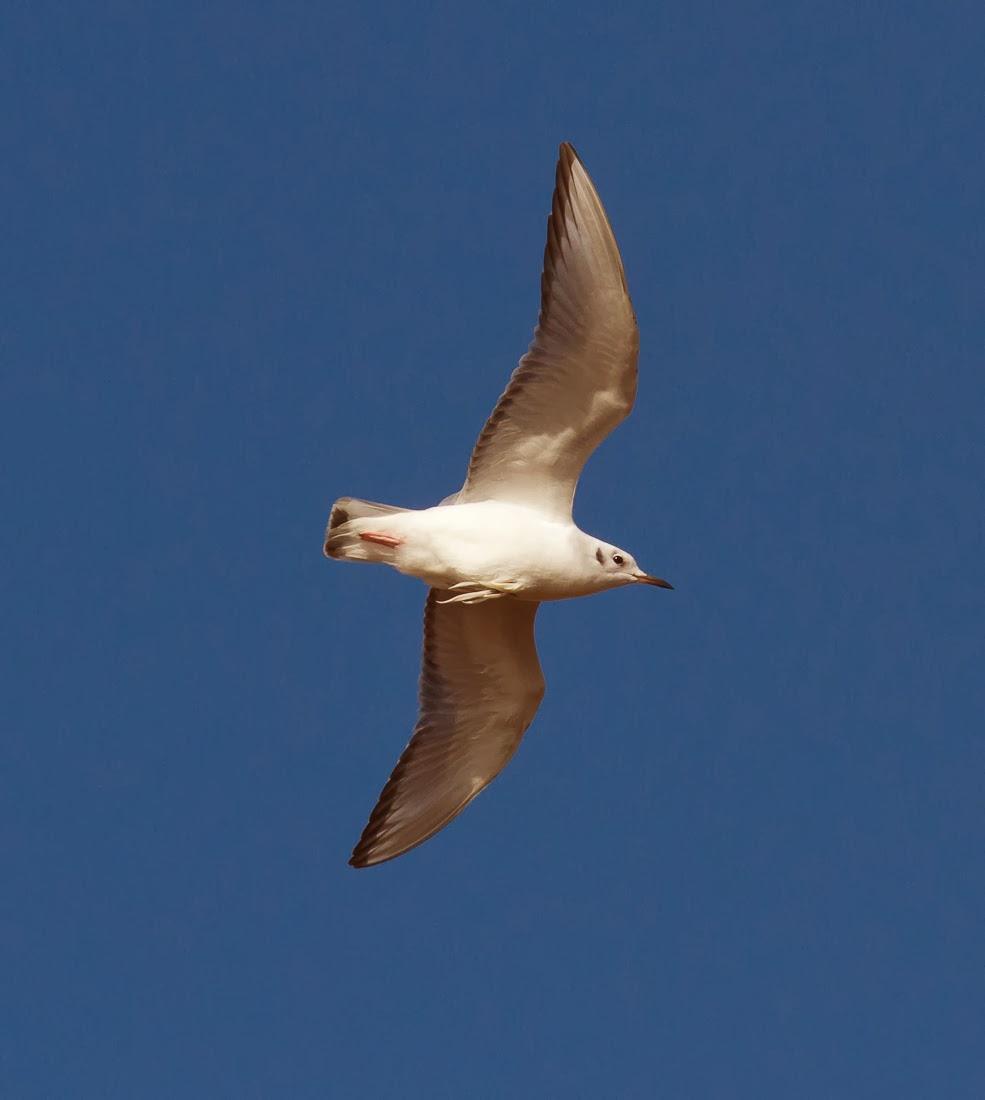 Surner Birding: HBC-Cape Cod Weekend