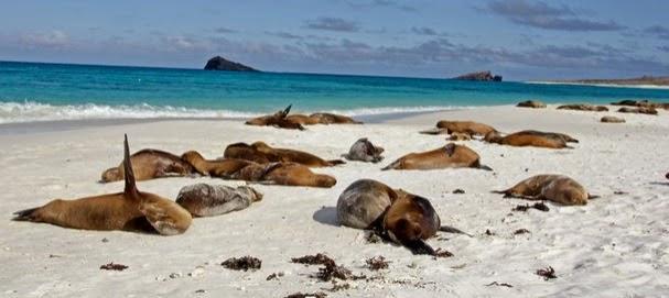20 destinos turísticos de Latinoamérica - Islas Galápagos: Ecuador
