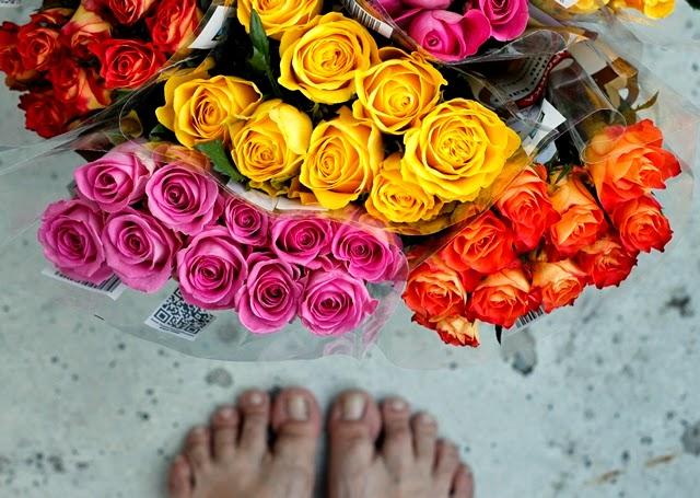 ruusuja eskareille