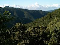 La Vall i la Serra de Picamena amb el Tagamanent a l'esquerra des del Coll de Can Rovira