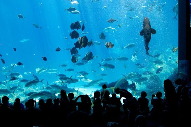 Georgia Aquarium - World Largest Aquarium