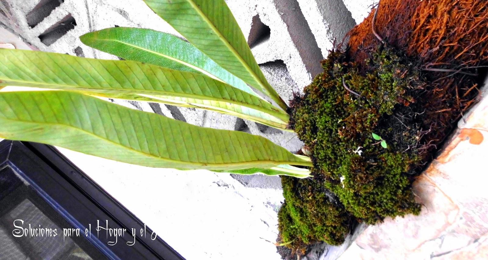 Plantas y Flores, hojas lanceoladas, planta aerea