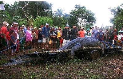 Biggest Crocodile