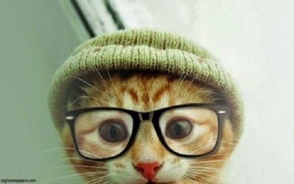 Photo chat mignon rigolo avec lunette et bonnet