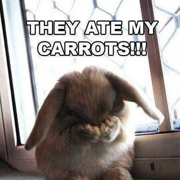 They Ate My Carrots!