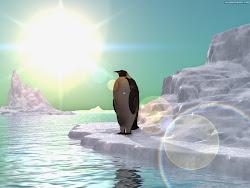 Seul comme un... Pingouin