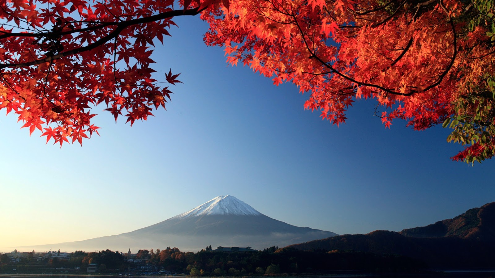 Mount Fuji Autumn maple Japan Android HD Wallpaper