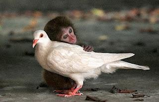 monyet peluk burung
