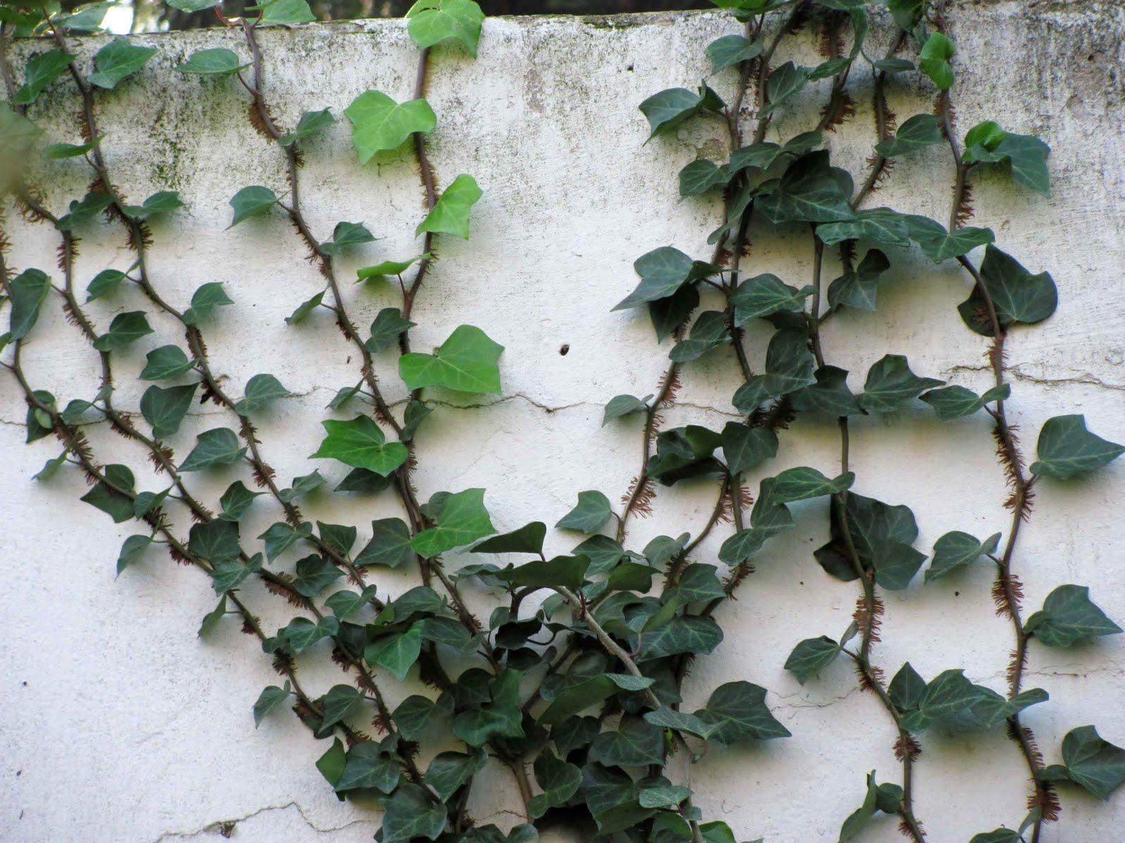 En el jardin enamorarse del muro y algo m s for Plantas para poner cerca de la piscina