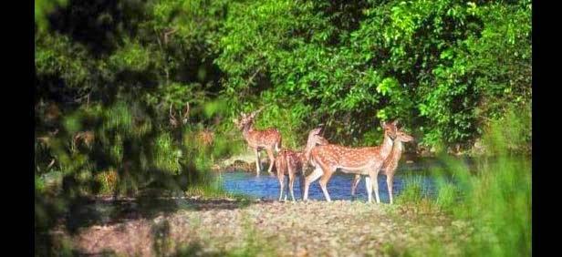 Spike Island Wildlife Sanctuary