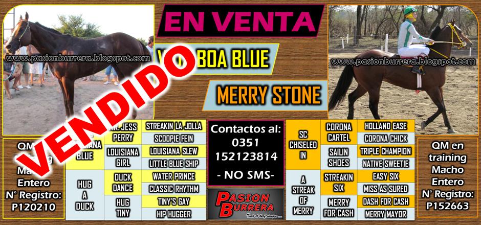 Vida Boa Blue - Merry Stone